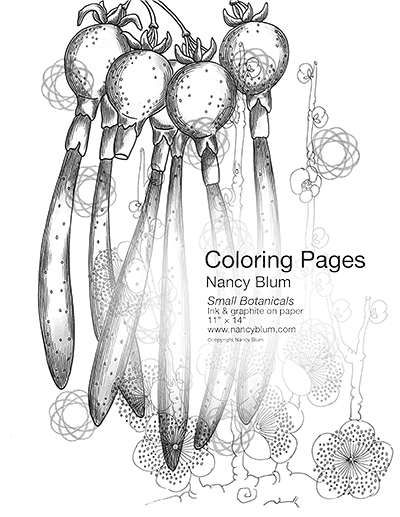 Coloring Pages - Small Botanicals